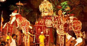 Elephants on Show in Perahera